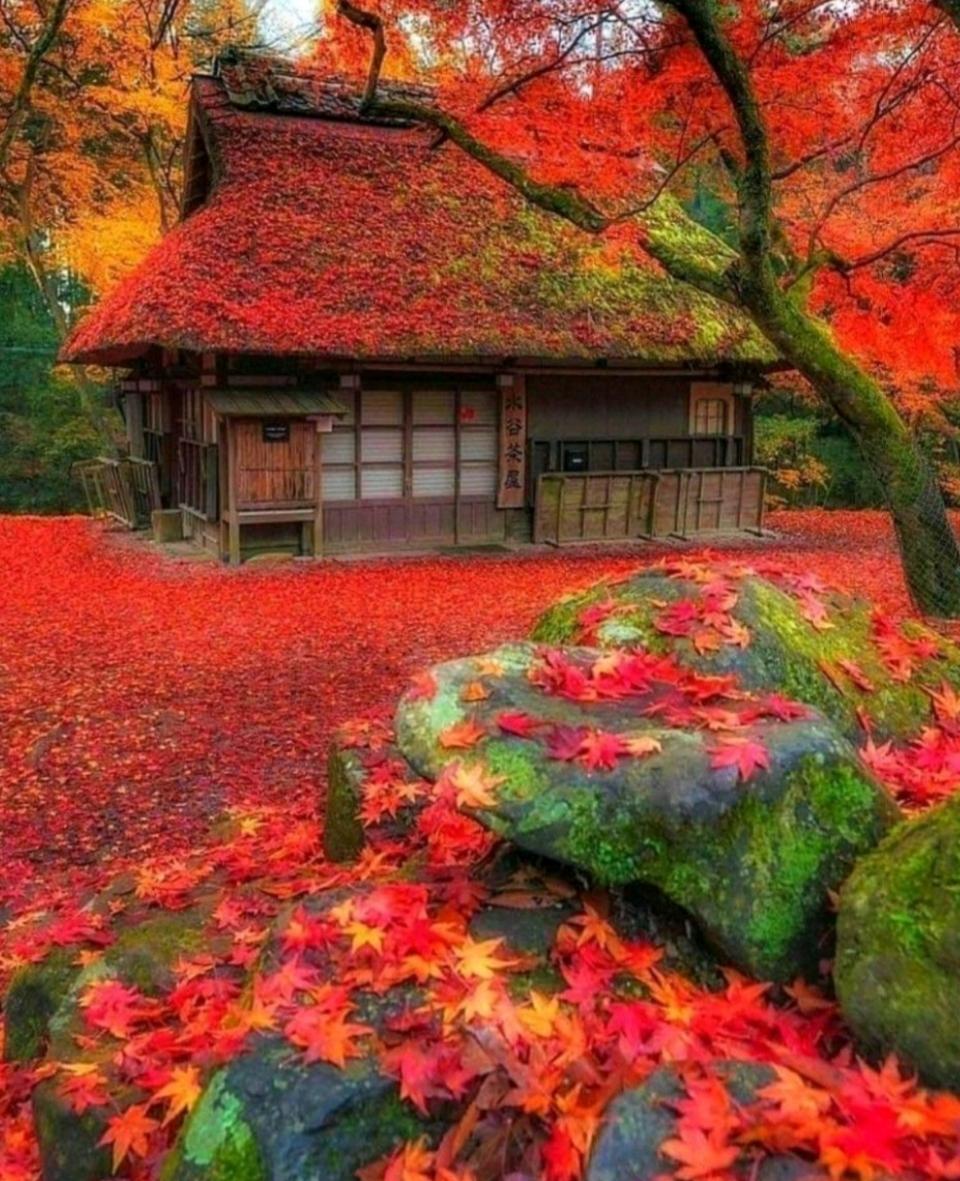 casa hojas