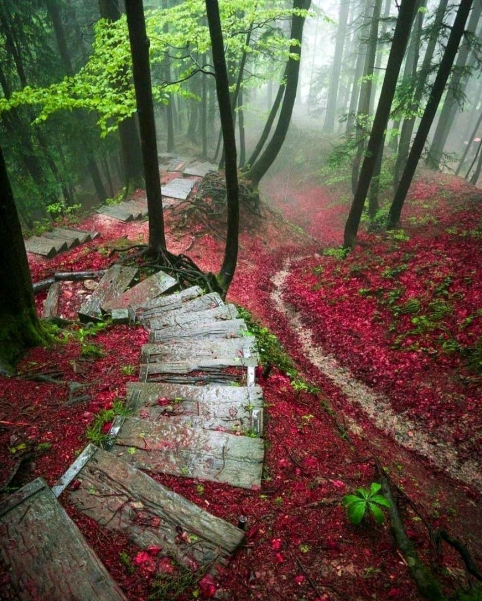 paseo hojas rojas