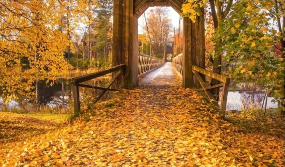 puente hojas